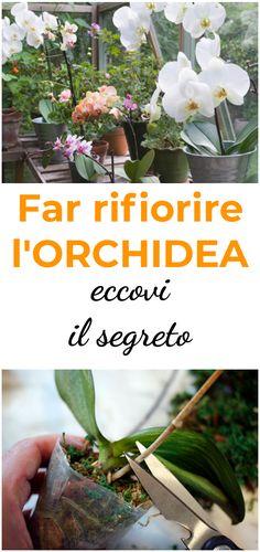 Flowers Garden Ideas – Greenest Way Outdoor Plants, Outdoor Gardens, Orchid Varieties, Chlorophytum, Begonia, Little Gardens, Orchidaceae, Plantar, Green Life
