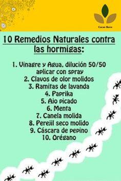 10 remedios naturales contra las hormigas - 10 Natural remedies for ants Home Remedies, Natural Remedies, Green Life, Pest Control, Permaculture, Garden Projects, Clean House, Beautiful Gardens, Garden Plants