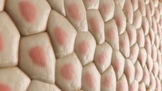 human skin cells - Yahoo Image Search Results