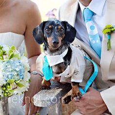 Matching suit for a dog ring bearer. I'm dying from cuteness overload!