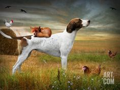 Fox And Hound Print By Ethiriel Photography Buy Prints, Prints For Sale, Fine Art Prints, Canvas Prints, The Fox And The Hound, Sale Poster, Cool Posters, Find Art, Framed Artwork
