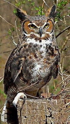 Keeping a watchful eye...