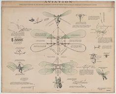 "1 print : lithograph, hand colored. | Design drawings for a man-powered flying machine with manually controlled wings entitled, ""Vélocipède aérien,"" proposed by Jean Jacques Bourcart, Paris, August, 1866. (Source: A.G. Renstrom, LC staff, 1981-82.)"