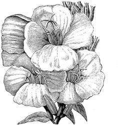 Free Vintage Digital Stamp - Primrose Flower