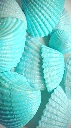 Teal and turquoise sea shells Mint Green Aesthetic, Blue Aesthetic Pastel, Aesthetic Colors, Blue Wallpaper Iphone, Blue Wallpapers, Shades Of Turquoise, Shades Of Blue, Aqua Blue, Color Cian