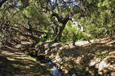 Dirt path winding through the beautiful Conejo Botanical Gardens in  Thousand Oaks, California