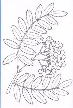 Użyj STRZAŁEK na KLAWIATURZE do przełączania zdjeć Fall Arts And Crafts, Autumn Crafts, Autumn Art, Fall Coloring Pages, Coloring Books, Floral Illustrations, Botanical Illustration, Embroidery Patterns, Quilt Patterns