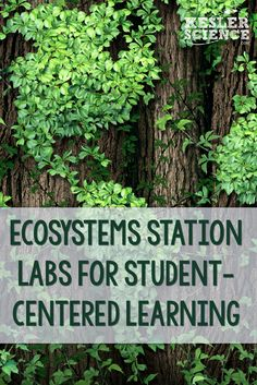 Student centered and differentiated station labs to teach ecosystems and ecology to your middle school science students. Science Student, Middle School Science, Science Classroom, Science Education, Life Science, Earth Science, Elementary Science, Physical Science, Classroom Ideas