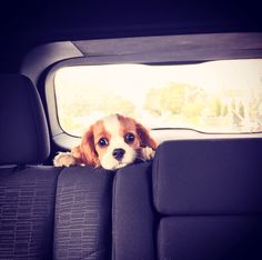 Cute Samson looking puppy. So cute.