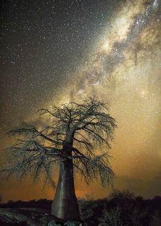 Ancient Trees II – Des photographies nocturnes des plus vieux arbres du monde