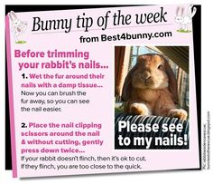 Pet bunny care life Ideas for 2019 Rabbit Life, House Rabbit, Pet Rabbit, Bunny Toys, Baby Bunnies, Bunny Rabbits, Funny Bunnies, Bunny Care Tips, Rabbit Facts