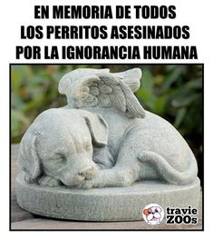in memory of all the dogs assassinated by the human ignorance in ricordo di tutti i cani assassinati per l'ignoranza umana Love Pet, I Love Dogs, Cute Dogs, Cute Babies, Animals And Pets, Baby Animals, Stop Animal Cruelty, Pet Loss, Cute Funny Animals