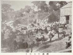 """Coffee Transportation (Mexico)"", Juvenile Encyclopedia, 1932 Vol. 14 World Geography 兒童百科大辭典 第十四巻 地理篇(三) 玉川學園出版部 昭和七年"