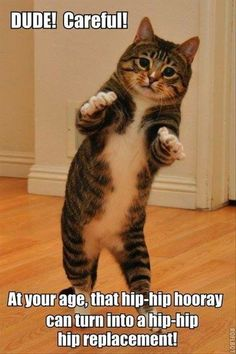 Make Dancing Cat memes or upload your own images to make custom memes Funny Animal Pictures, Funny Animals, Cute Animals, Funny Photos, Crazy Cat Lady, Crazy Cats, Gato Grumpy, Dancing Cat, Dancing Animals