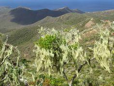 Auf, in die Karibik: Curacao - Roadtrippin' Berg, Strand, Mountains, Nature, Travel, Caribbean, Island, Naturaleza, Viajes