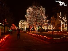 Lights at the Zoo - an annual tradition in Toledo, Ohio