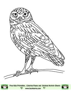 owl coloring pages free printables | Owl Coloring Pages,Lucy Learns Owl Coloring Page Elf Owl Pictures to ...