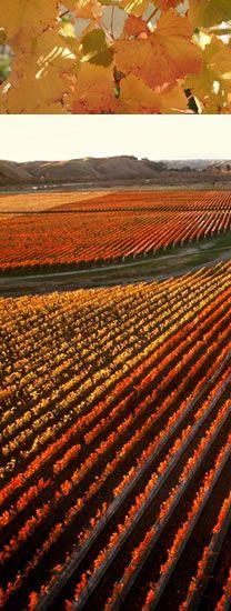Wijngaarden Hawkes Bay   Nieuw-Zeeland    www.melman-communications.nl