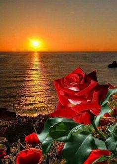 Beautiful Flowers Wallpapers, Beautiful Rose Flowers, Beautiful Gif, Amazing Flowers, Love Flowers, Beautiful Artwork, Angel Wallpaper, Flower Wallpaper, Amazing Sunsets