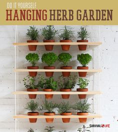 DIY Indoor Vertical Herb Garden | Ideas for small gardens and gardening on a budget at survivallife.com