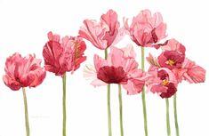 Pink Parrot Tulip Field Watercolor. Tattoo idea.