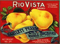Rio Vista Pears. #crateart