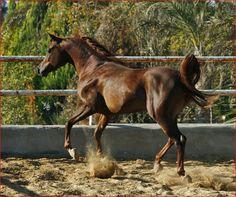 30 Best Gelding Horses Images Horses Beautiful Horses