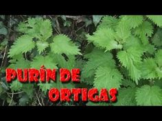 El purín de ortigas - YouTube