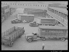 Trucks at Union Stockyards. Chicago, Illinois
