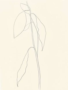ellsworth kelly Avocado Leaves, 1967 Voir la traduction