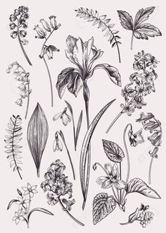 Set with spring flowers Vintage botanical illustration Vector floral elements Black and white Stock Vector - 109758290 Botanical Tattoo, Botanical Drawings, Botanical Flowers, Botanical Art, Floral Flowers, Botanical Gardens, Gravure Illustration, Illustration Blume, Illustration Botanique