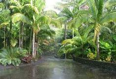 South Florida Front Landscaping Ideas - Bing Images