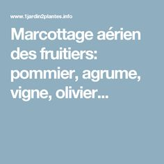 Marcottage aérien des fruitiers: pommier, agrume, vigne, olivier... Permaculture, Gardening, Nature, Apple Tree, Garden Markers, Plant Cuttings, Plants, Naturaleza, Lawn And Garden