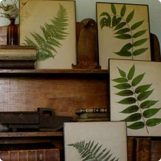 pressed ferns and flowers