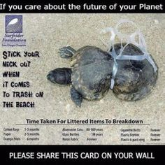Care enough for these poor turtles and other animals.