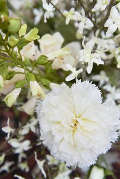 Pure Nature : Foxglove & Carnation