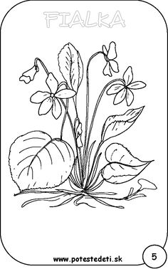 fialka Embroidery Transfers, Embroidery Stitches, Embroidery Patterns, Hand Embroidery, Quilt Patterns, Flower Coloring Pages, Colouring Pages, Snow Drops Flowers, Flower Drawing For Kids