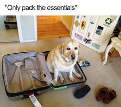 The Essential Dog