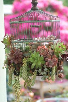 Gartendekoration selber machen Garden decorations themselves make succulents in a cage Cage Deco, Diy Hanging Planter, Planter Ideas, Diy Planters, Deco Floral, Ornamental Plants, Bird Cage, Planting Succulents, Amazing Gardens