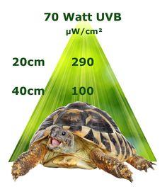 UV Lampe für Terrarien - gemessene UVB Werte einer 70 Watt Metalldampflampe. Diese Terrarium Lampe sorgt für UVB Strahlung, helles sichtbares Licht und Wärme. All das ist für die Vitamin D3 Synthese bei Reptilien notwendig. Vitamin D3, Terrariums, Reptiles