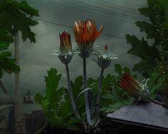 """Botanical Inquiry"" by Photographer Daniel Shipp - BOOOOOOOM! - CREATE * INSPIRE * COMMUNITY * ART * DESIGN * MUSIC * FILM * PHOTO * PROJECTS"