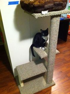 DIY cat tower- using an 8 ft 2x4, scrap MDF or plywood, 50 ft sisal rope, and 1 yd x 12 ft carpet piece-- sounds very doable!