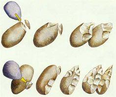 Tecnología de la piedra parece haber surgido en el Valle del Rift oriental hace unos 2,6 millones de años.