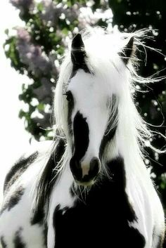 Painted horse, Native American's believed that the dark breast plate protected both rider and horse.  The horse spirit.