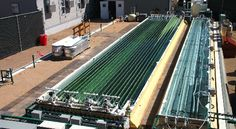 Colorado Company to Take Algae-Based Fuel to the Next Level