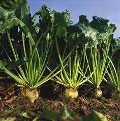 Naše produkty - Agro Bystřice a.s.