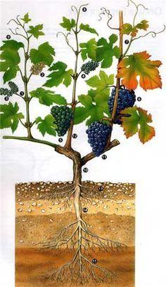 Ideas fruit trees planting for 2019 Grafting Fruit Trees, Grafting Plants, Greenhouse Farming, Craft Shed, Vegetable Garden Design, Garden Trellis, Fruit Garden, My Secret Garden, Farm Gardens