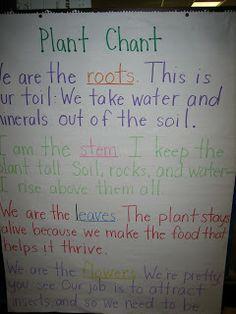 plant life cycle-- plant chant