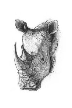 'Rhinoceros' by mikekoubou Animal Sketches, Art Drawings Sketches, Animal Drawings, Cute Drawings, Pencil Drawings, Rhino Tattoo, Tattoo Art, Rhino Art, Illustration Art