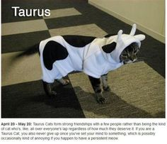 cat constellation:Taurus